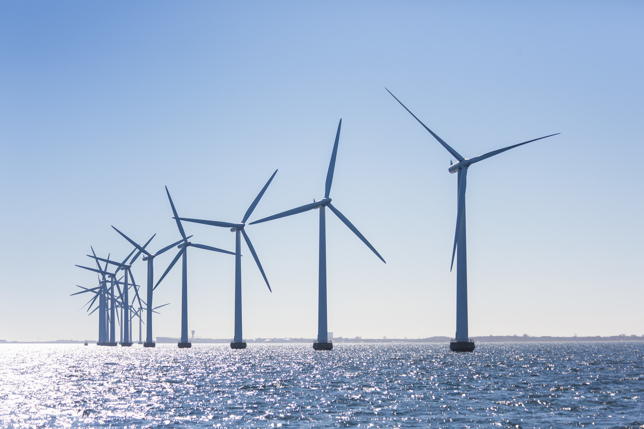 Regional Collaboration To Understand And Minimize Waterbird Impacts From Offshore Wind Energy Development
